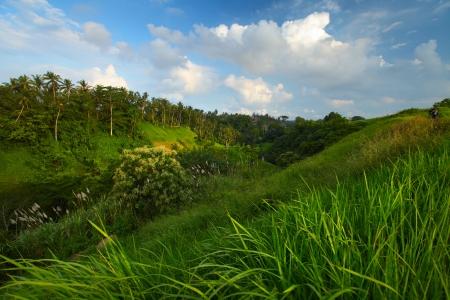 herbs wild: Colinas verdes del verano con prados y hierbas silvestres