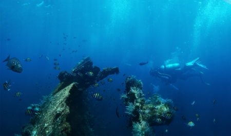 fining: Underwater shoot of group of a divers exploring ship wreck USAT Liberty. Bali, Indonesia
