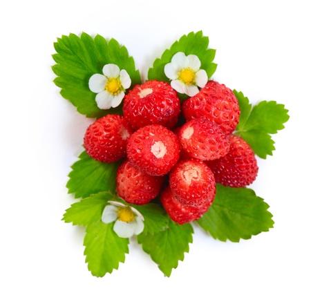 fresa: Fresa madura con las hojas verdes y flores aisladas sobre fondo blanco