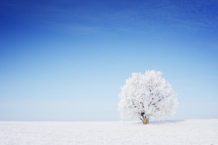 snowy background: Winter tree in a field with blue sky Stock Photo