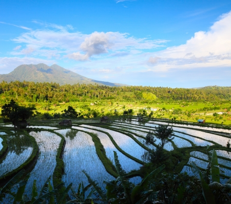Rice fields and mountains on the horizon at sunny day. Bali. Indonesia Stock Photo - 16875529