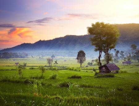 Los campos de arroz y montañas en el horizonte al amanecer. Bali. Indonesia Foto de archivo