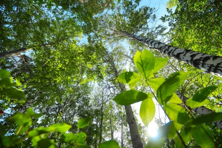 Green forest at sunny day Stock Photo - 16875502