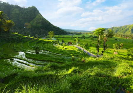 Green rice fields among mountains. Bali, Indonesia Stock Photo - 16875510