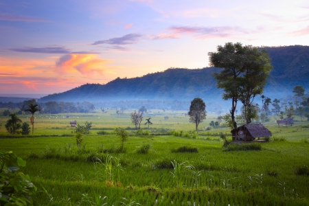 Rice fields and mountains on the horizon at sunrise. Bali. Indonesia Stock Photo - 16875515
