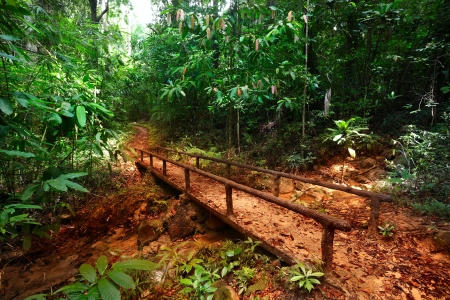 Walkway in a bush tropical forest Stock Photo - 16875538