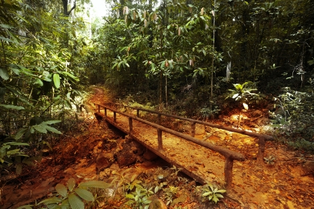 Walkway in a bush tropical forest Stock Photo - 16875494