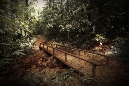 Walkway in a dark and wild tropical forest Stock Photo - 16875516
