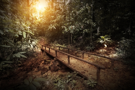 Walkway in a dark and wild tropical forest Stock Photo - 16875508