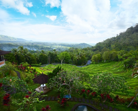 Rice field and garden with flowers among a mountains. Bali, Indonesia Stock Photo - 16875528