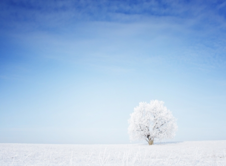 winter landscape: Winter tree in a field with blue sky Stock Photo