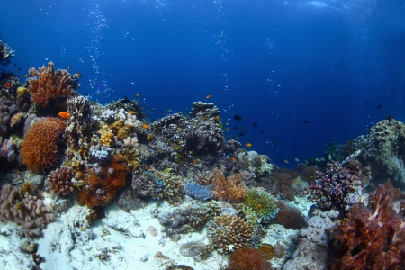 Vivid coral reef with fishes and bubbles in a blue tropical sea. Balicasag island, Philippines Stock Photo - 18043025