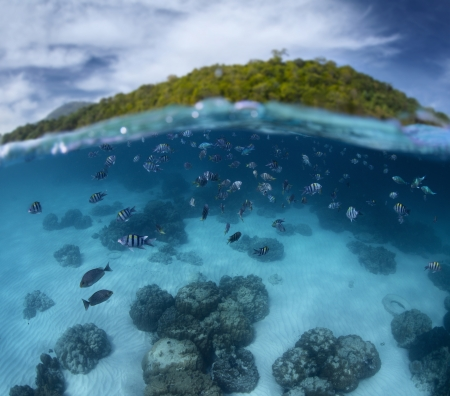 split level: Underwater shoot of a tropical sea with school of fish and green island on the background (out of focus) Stock Photo