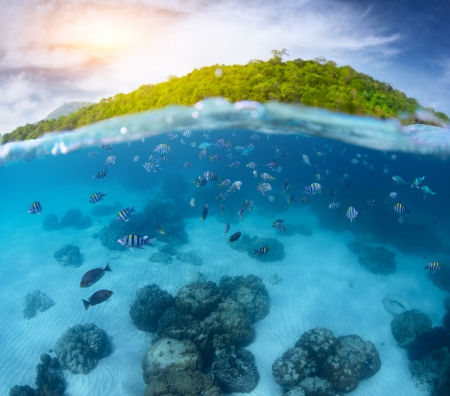 Underwater shoot of a tropical sea with school of fish and green island on the background (out of focus) photo