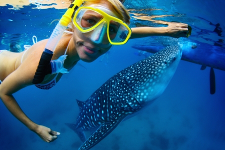 underwater diving: Close up underwater shoot of a young lady snorkeling with gigantic whale shark