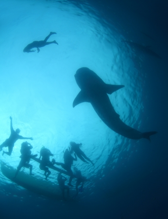 Gigantic whale shark gliding in a depth and group of snorkelers on a surface. Cebu island, Philippines Stock Photo - 18027596