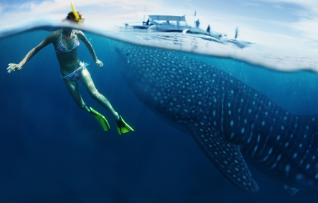 Young lady snorkeling in tropical sea with gigantic whale shark ( Rhincodon typus) photo