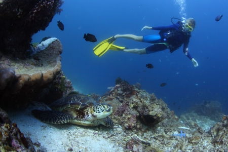 bottom of sea: Underwater shoot of a diver watching a sea turtle (Chelonioidea)  on bottom