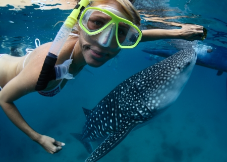 shark bay: Close up underwater shoot of a young lady snorkeling with gigantic whale shark