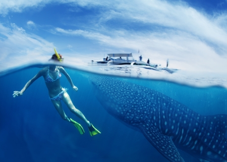 shark bay: Young lady snorkeling in tropical sea with gigantic whale shark ( Rhincodon typus)