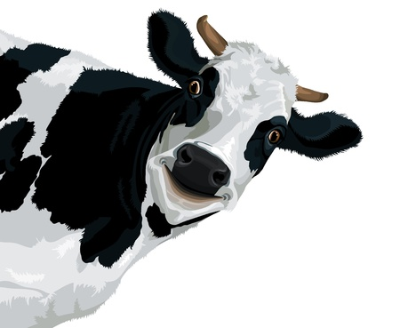 cow head: Funny smiling cow illustration on a white background