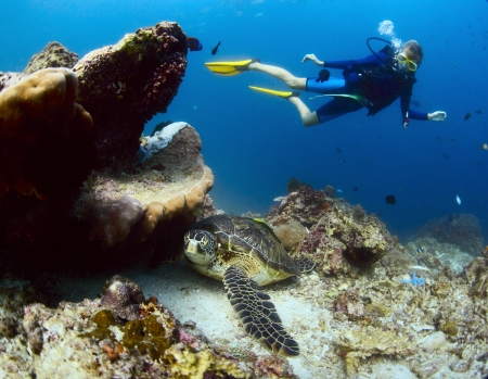 Underwater shoot of a diver watching a sea turtle ( Chelonioidea) having rest on a bottom Stock Photo - 19362661