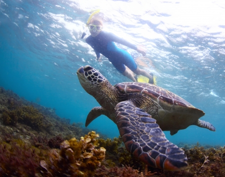 Underwater shoot of a snorkeler watching a sea turtle ( Chelonioidea) swimming over a bottom
