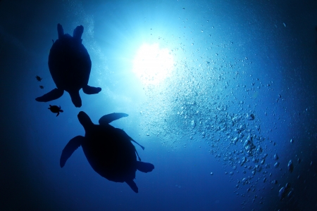 Collage of underwater world with sea turtle family swimming in the depth photo