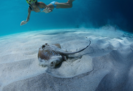 Underwater shoot of a woman swimming over sandy sea bottom and watching spotted ray Stock Photo - 19872805