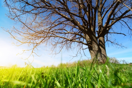 branchy: Spring bare tree and lush green grass on a meadow at sunny day Stock Photo