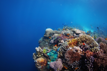 bottom of sea: Coral reef in a tropical sea. Philippines, Balikasag island