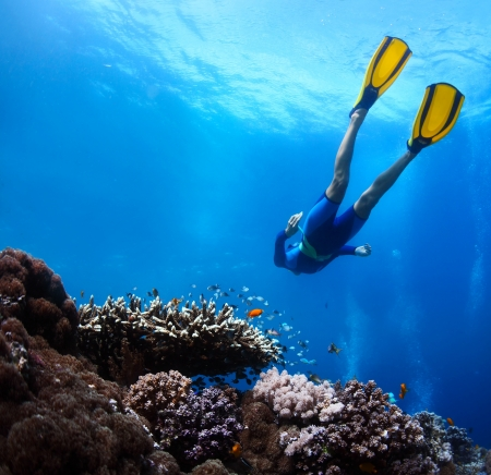Freediver gliding underwater over vivid coral reef Standard-Bild
