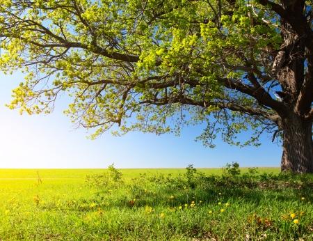 jeden: Jarní strom s čerstvými zelenými listy na kvetoucí louce