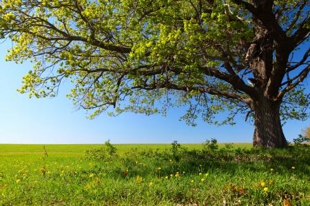 피 초원에 신선한 녹색 잎 봄 나무