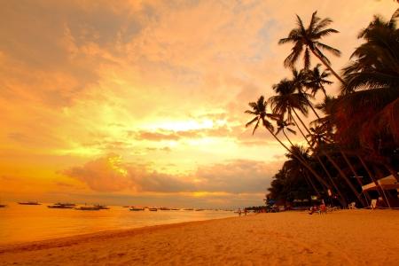 bohol: Tropical beach with palm trees. Philippines, Panglao island