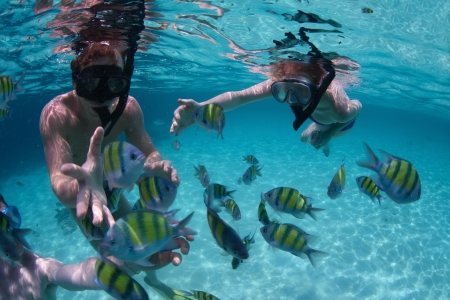 Young friends having fun in a tropical sea. Underwater scene with fish Stock Photo