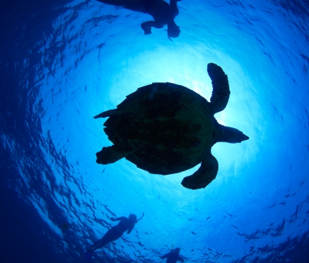 Young friends having fun in a tropical sea with turtle photo