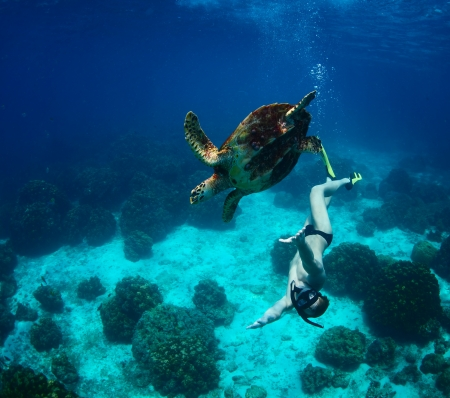 Young man snorkeling in a tropical sea with turtle photo