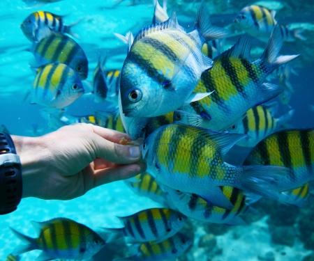 Feeding fish underwater