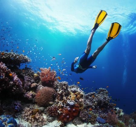 livsstil: Fridykare glida under vattnet över levande korallrev Stockfoto