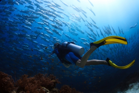 Scuba diver finning towards school of Jack fish in a tropical sea Stok Fotoğraf