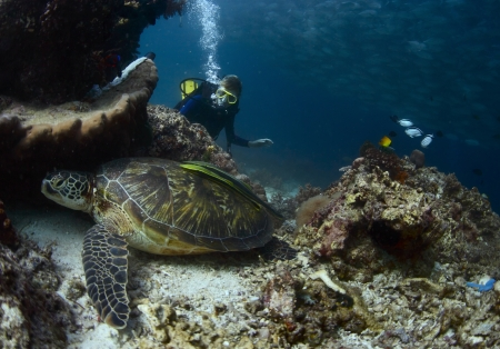 Scuba diver exploring coral reef with abundance of marine life photo