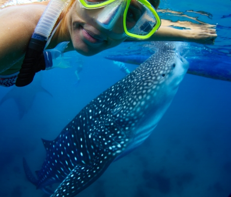shark bay: Young lady snorkeling with whale shark