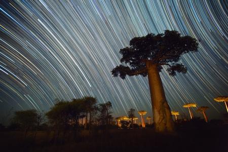 baobab: Baobab and night sky with star trails. Madagascar