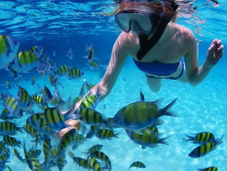 シュノーケ リング、tropoical 海の魚を餌に若い女性 写真素材