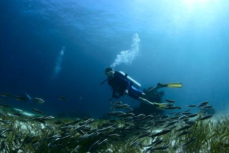 바다의 바닥에 작은 물고기의 학교를보고 스쿠버 다이버 스톡 콘텐츠