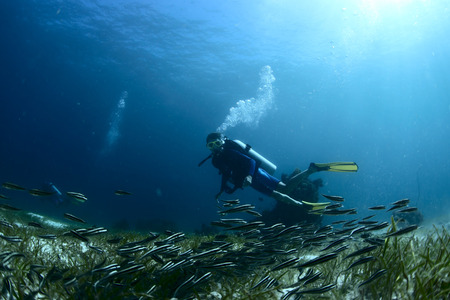 Scuba diver watching school of tiny fish over bottom of a sea Banco de Imagens - 25581190