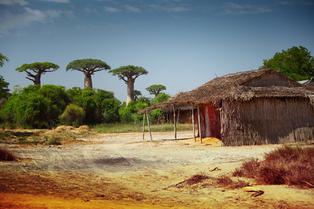 baobab: Yard and traditional Malagasy house on a dry land with baobabs on the background. Madagascar Stock Photo