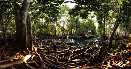 tha: Mangrove trees in a peat swamp forest. Tha Pom canal area, Krabi province, Thailand