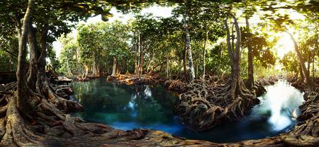 泥炭湿地林におけるマングローブの木。Tha ポンポン運河エリア、クラビ、タイ 写真素材 - 25582373